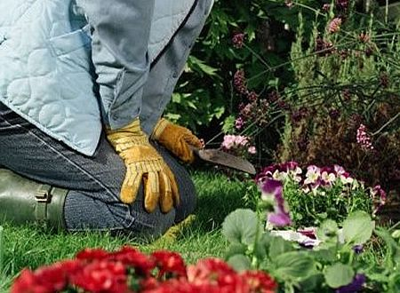 Curso actividades auxiliares en viveros jardines y for Auxiliar jardineria
