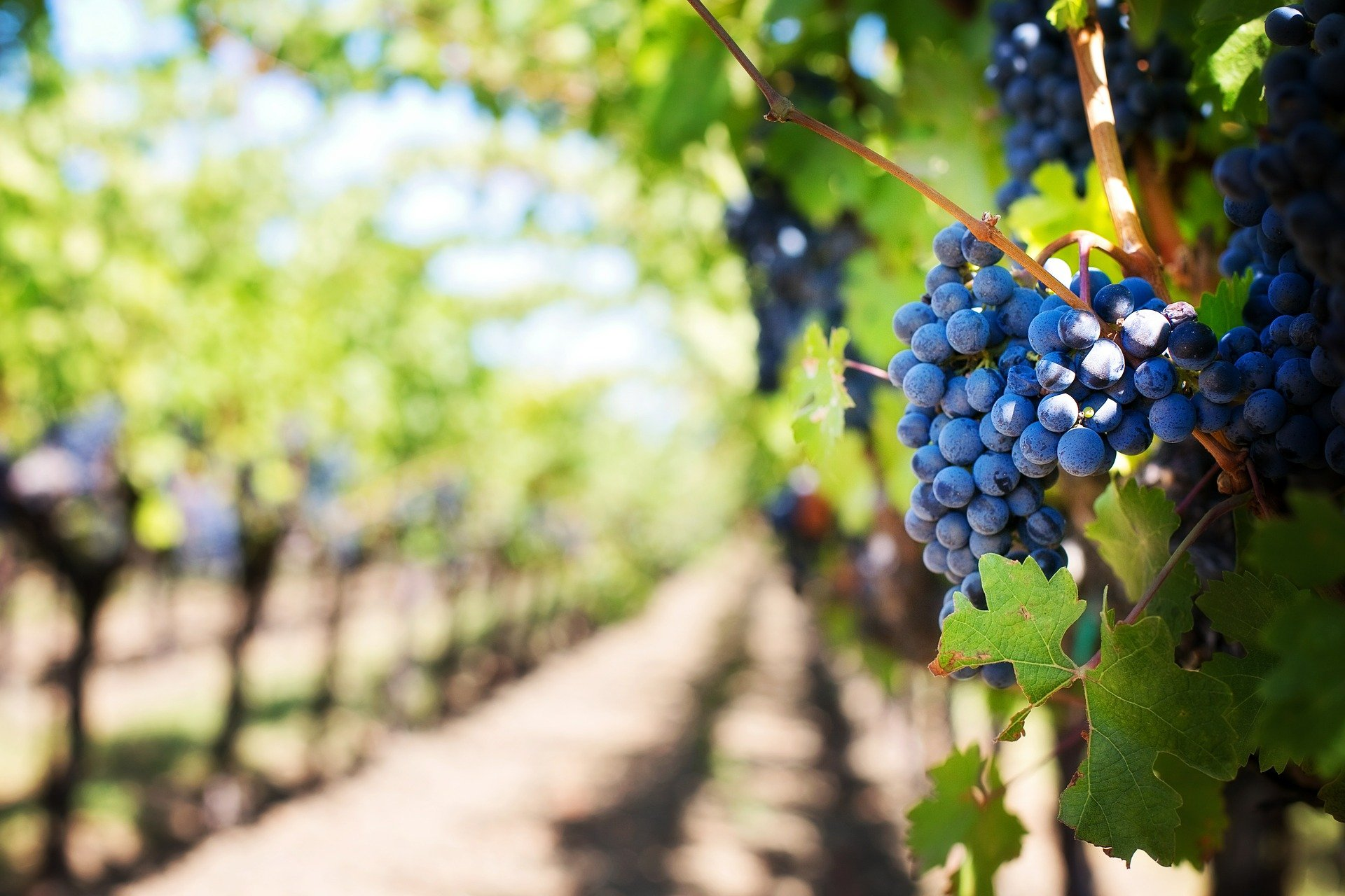 Industria agroalimentaria: Marca Territorio